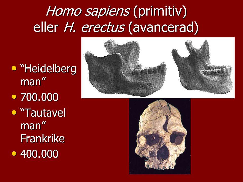 Homo sapiens (primitiv) eller H. erectus (avancerad)
