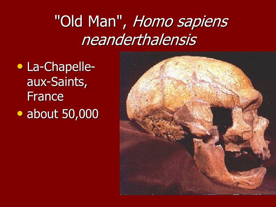 Old Man , Homo sapiens neanderthalensis