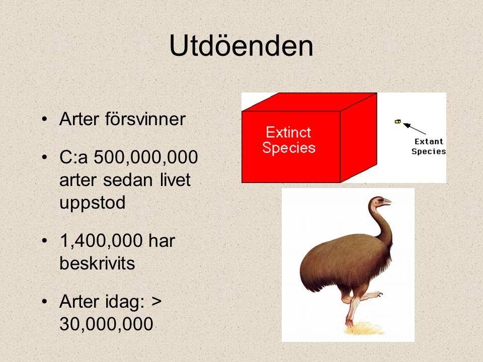 Utdöenden Arter försvinner C:a 500,000,000 arter sedan livet uppstod