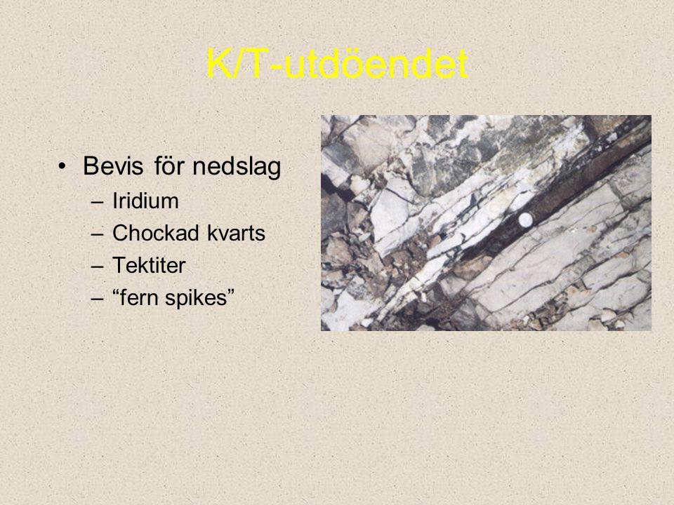 K/T-utdöendet Bevis för nedslag Iridium Chockad kvarts Tektiter