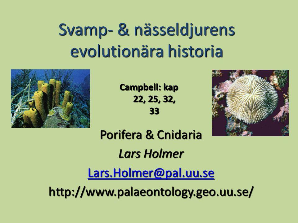 Svamp- & nässeldjurens evolutionära historia