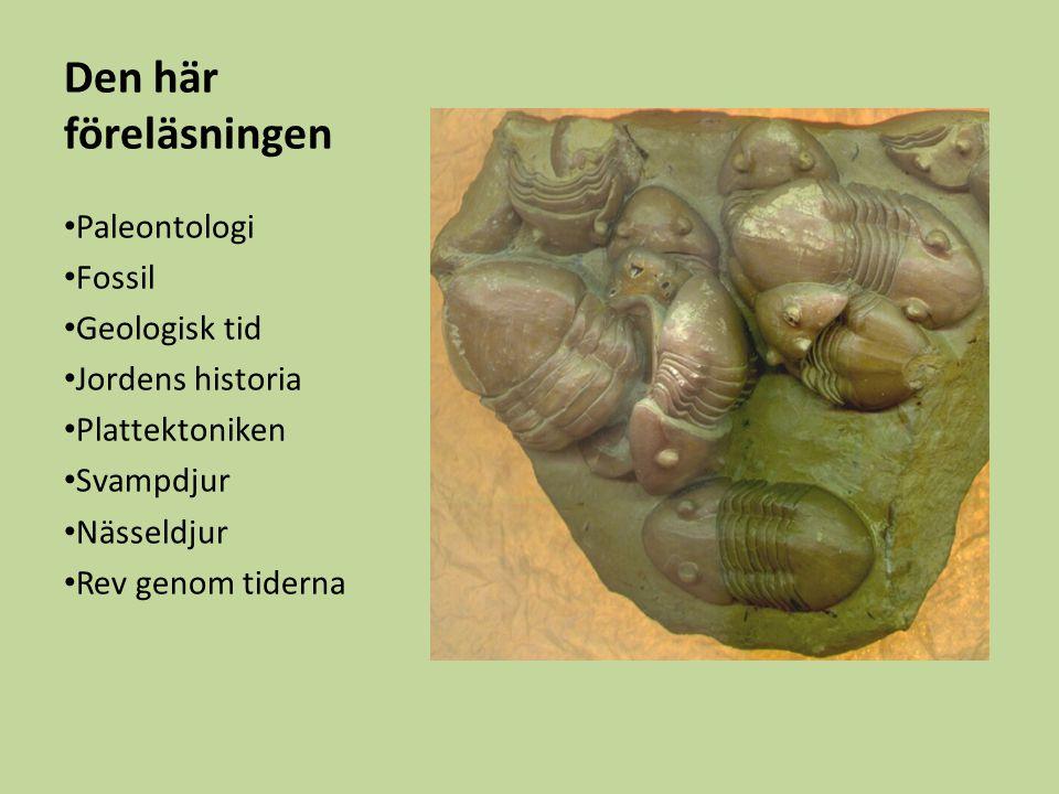 Den här föreläsningen Paleontologi Fossil Geologisk tid