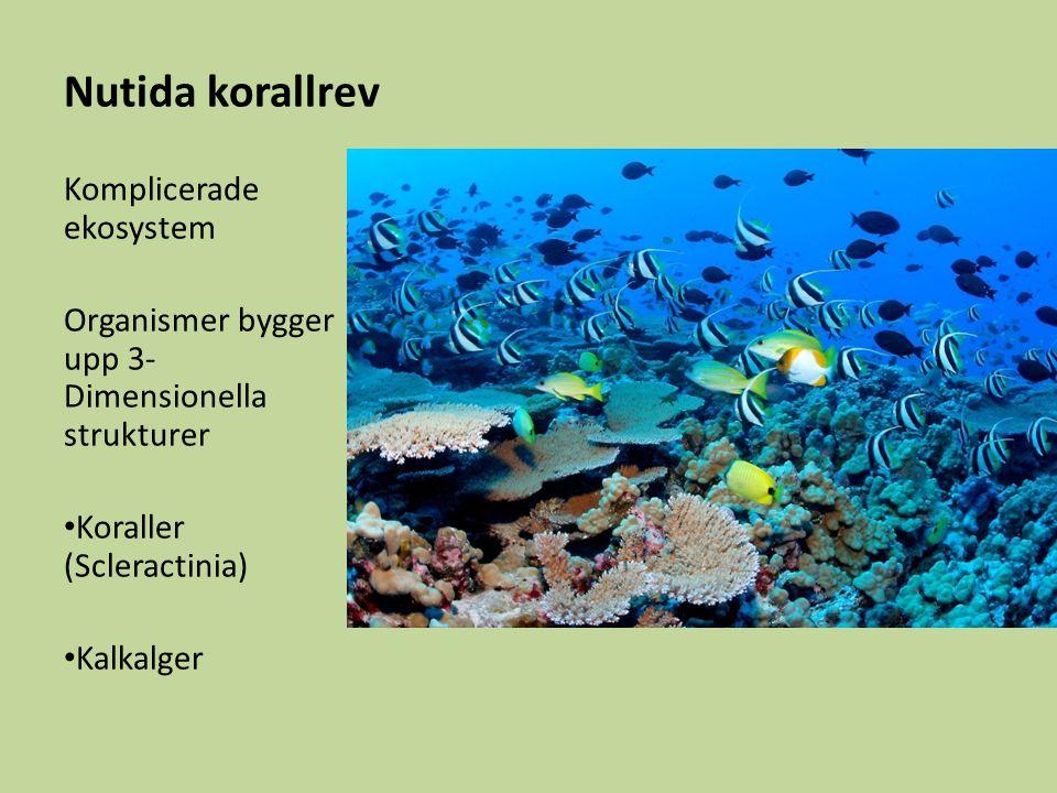 Nutida korallrev Komplicerade ekosystem