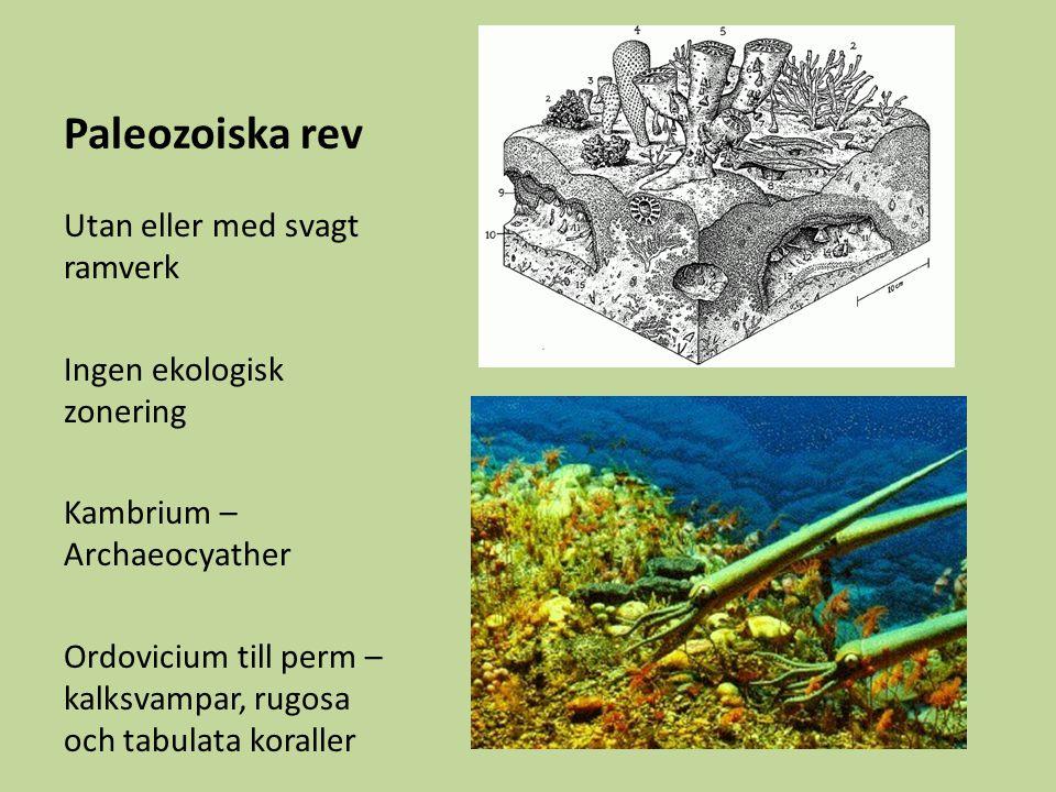 Paleozoiska rev Utan eller med svagt ramverk Ingen ekologisk zonering