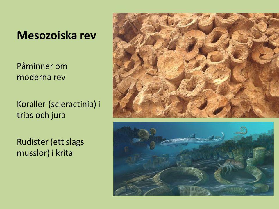 Mesozoiska rev Påminner om moderna rev