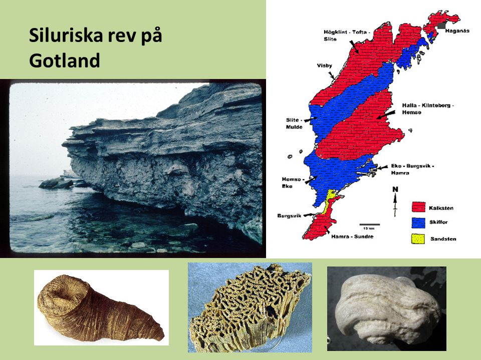 Siluriska rev på Gotland