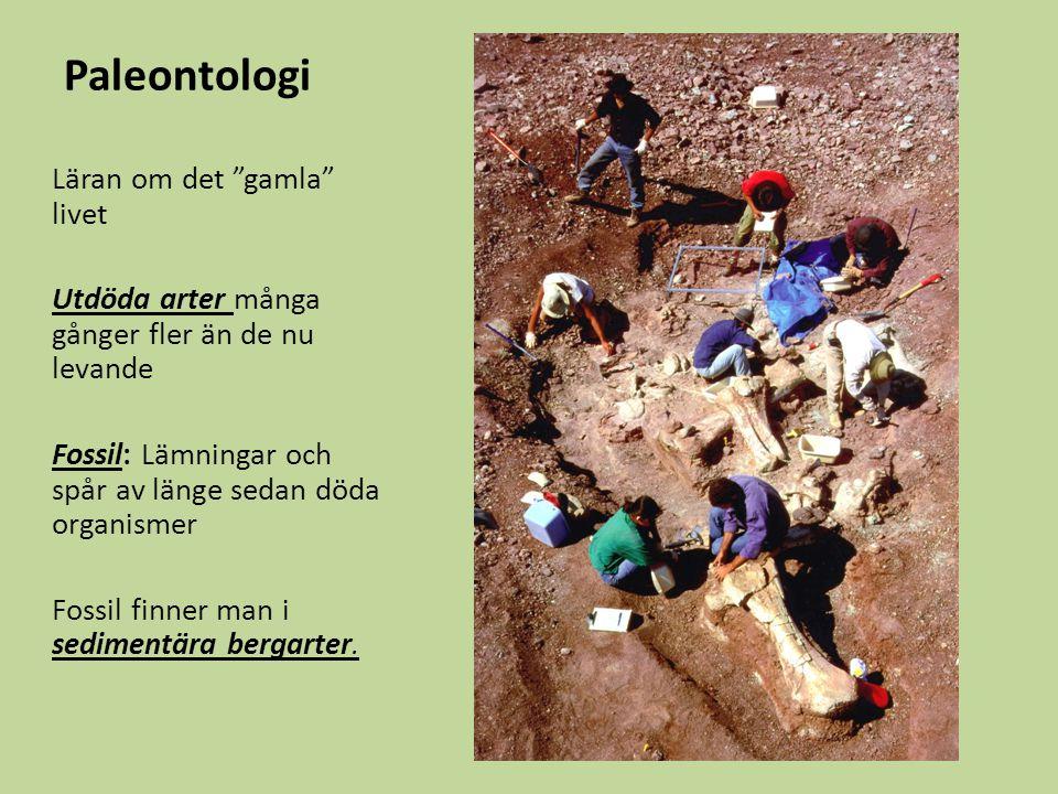 Paleontologi Läran om det gamla livet
