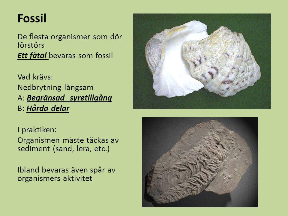 Fossil De flesta organismer som dör förstörs