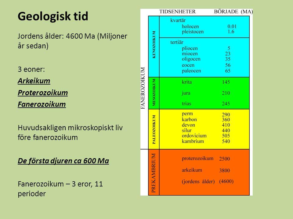 Geologisk tid Jordens ålder: 4600 Ma (Miljoner år sedan) 3 eoner: