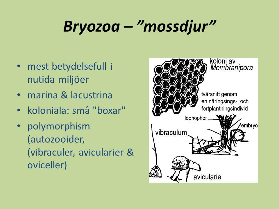 Bryozoa – mossdjur mest betydelsefull i nutida miljöer