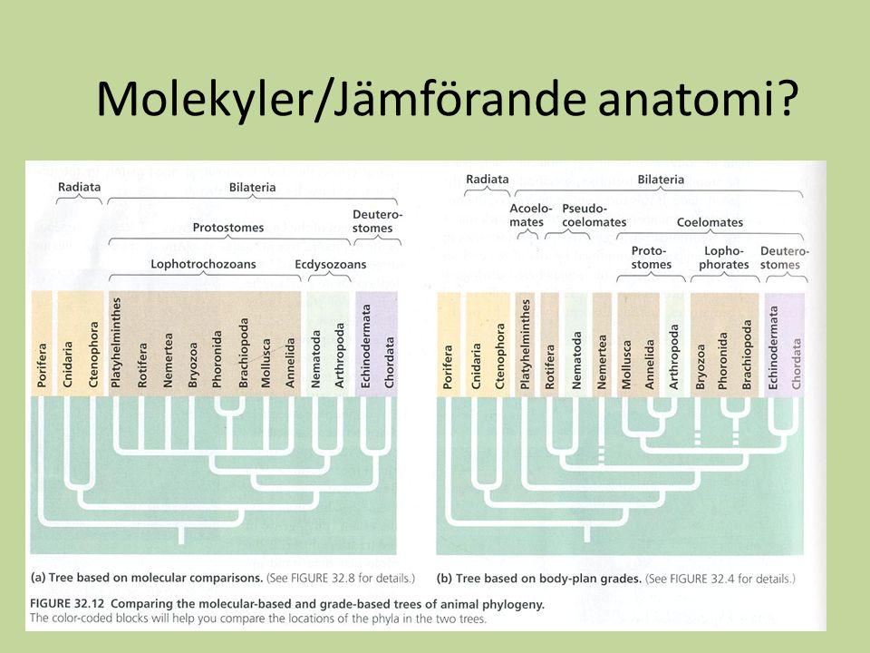 Molekyler/Jämförande anatomi