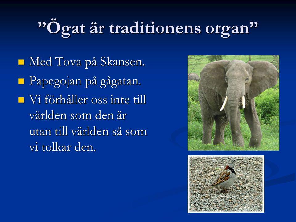 Ögat är traditionens organ