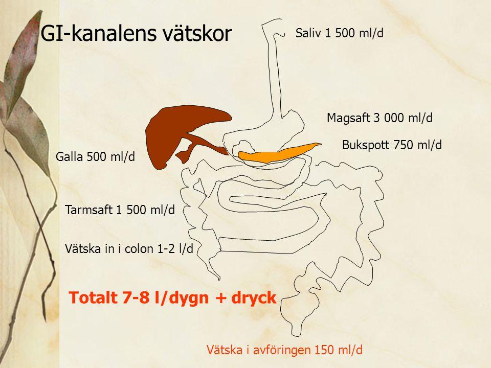 GI-kanalens vätskor Totalt 7-8 l/dygn + dryck Saliv 1 500 ml/d