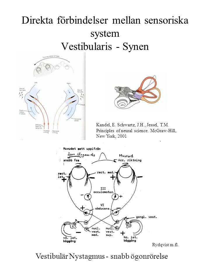 Direkta förbindelser mellan sensoriska system Vestibularis - Synen