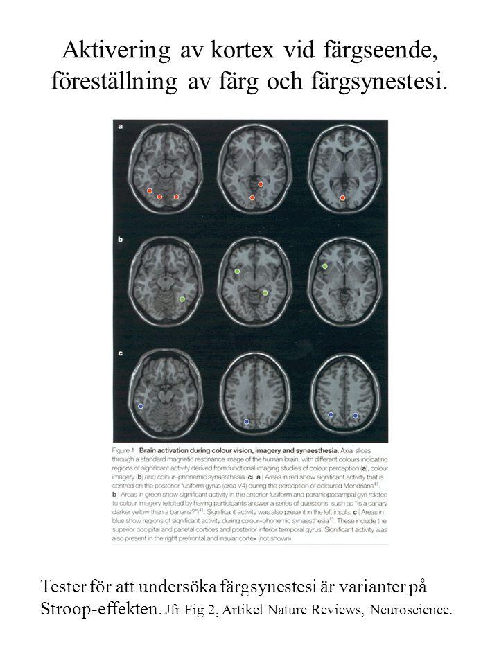 Aktivering av kortex vid färgseende, föreställning av färg och färgsynestesi.
