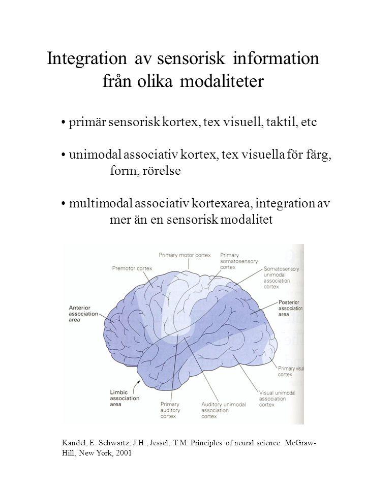Integration av sensorisk information från olika modaliteter