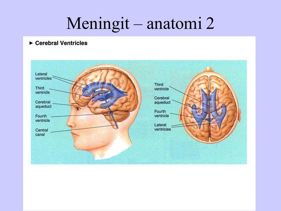 Meningit – anatomi 2