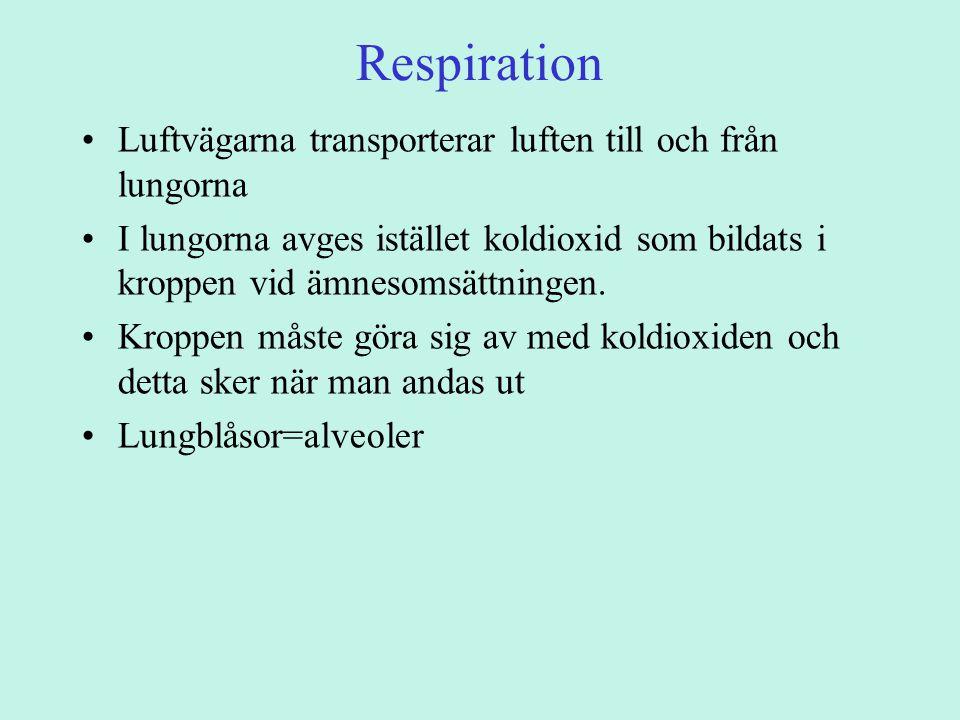 Respiration Luftvägarna transporterar luften till och från lungorna