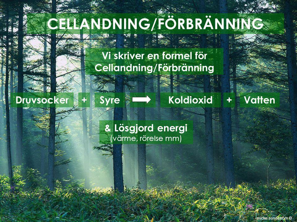 CELLANDNING/FÖRBRÄNNING