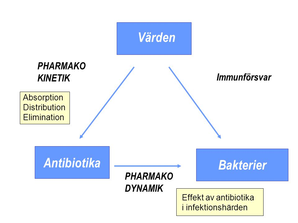 Antibiotika Bakterier
