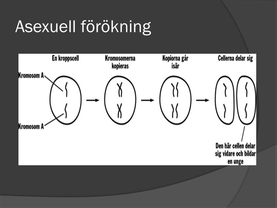 Asexuell förökning