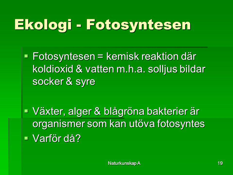 Ekologi - Fotosyntesen