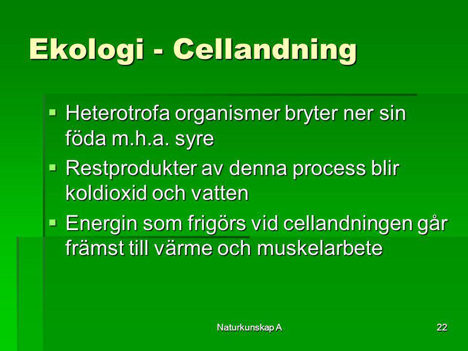 Ekologi - Cellandning Heterotrofa organismer bryter ner sin föda m.h.a. syre. Restprodukter av denna process blir koldioxid och vatten.