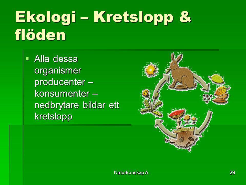Vad är ett kretslopp ekologi