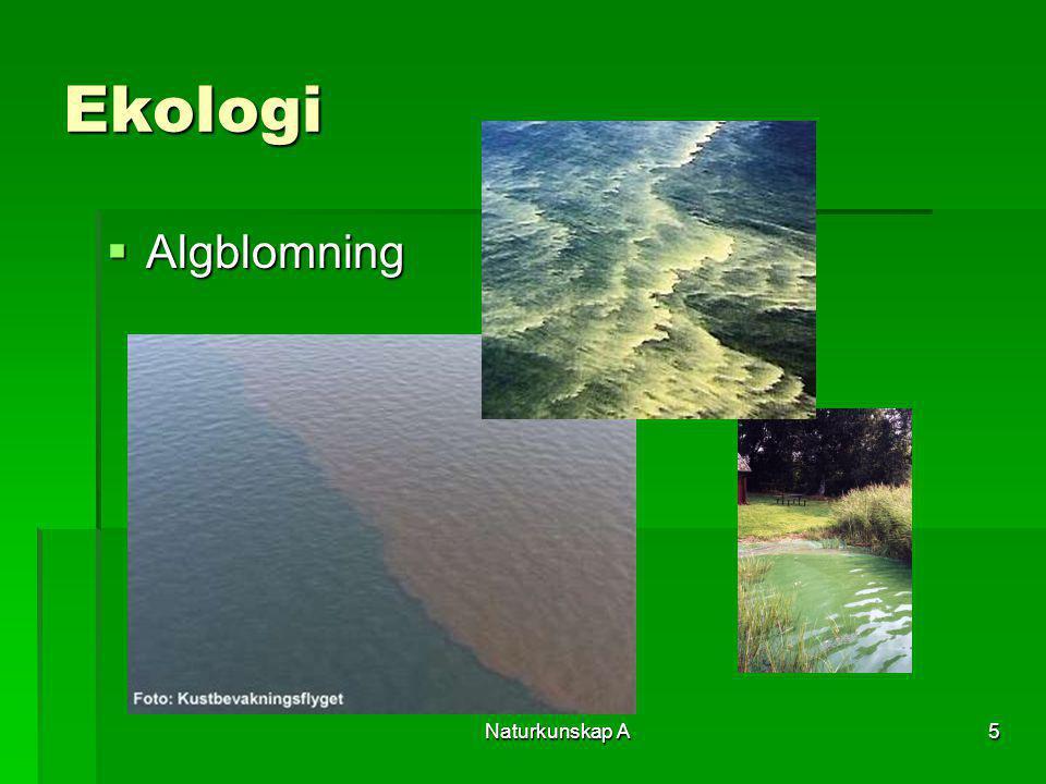 Ekologi Algblomning Naturkunskap A