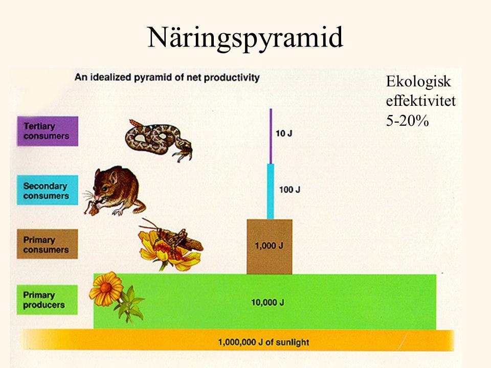 Näringspyramid Ekologisk effektivitet 5-20%