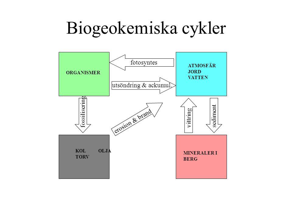 Biogeokemiska cykler fotosyntes utsöndring & ackumul. fossilisering