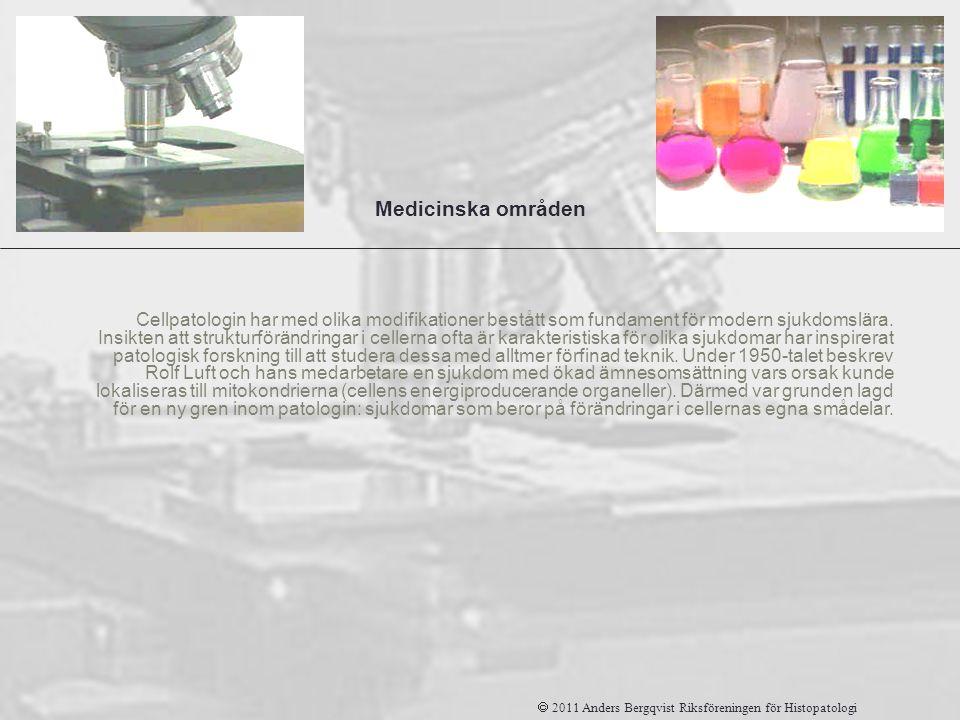 Patologi Medicinska områden