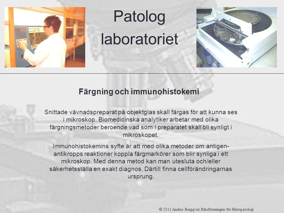 Patolog laboratoriet Färgning och immunohistokemi