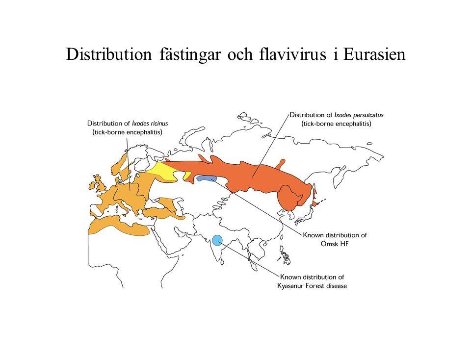 Distribution fästingar och flavivirus i Eurasien