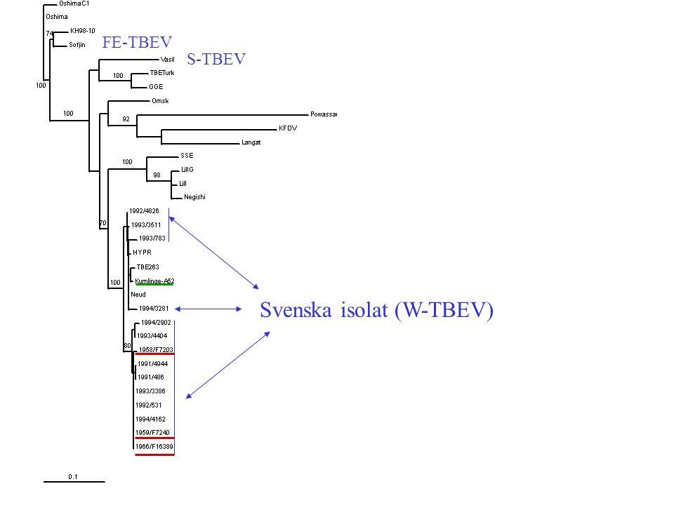 Svenska isolat (W-TBEV)