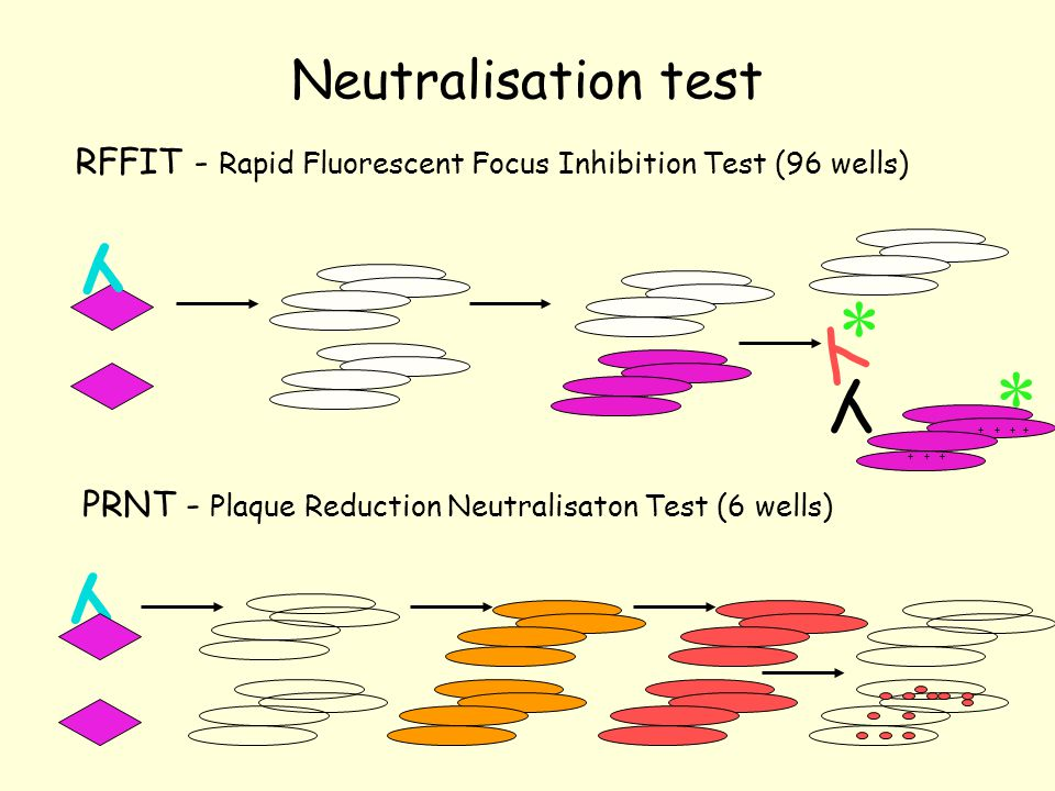 PRNT - Plaque Reduction Neutralisaton Test (6 wells)
