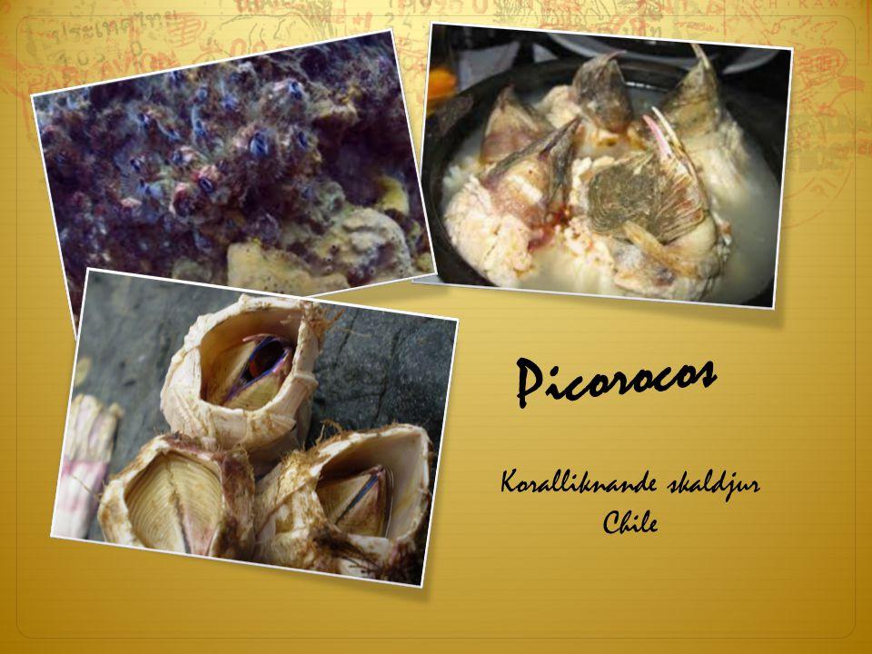 Koralliknande skaldjur Chile
