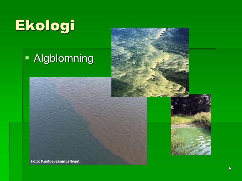 Ekologi Algblomning