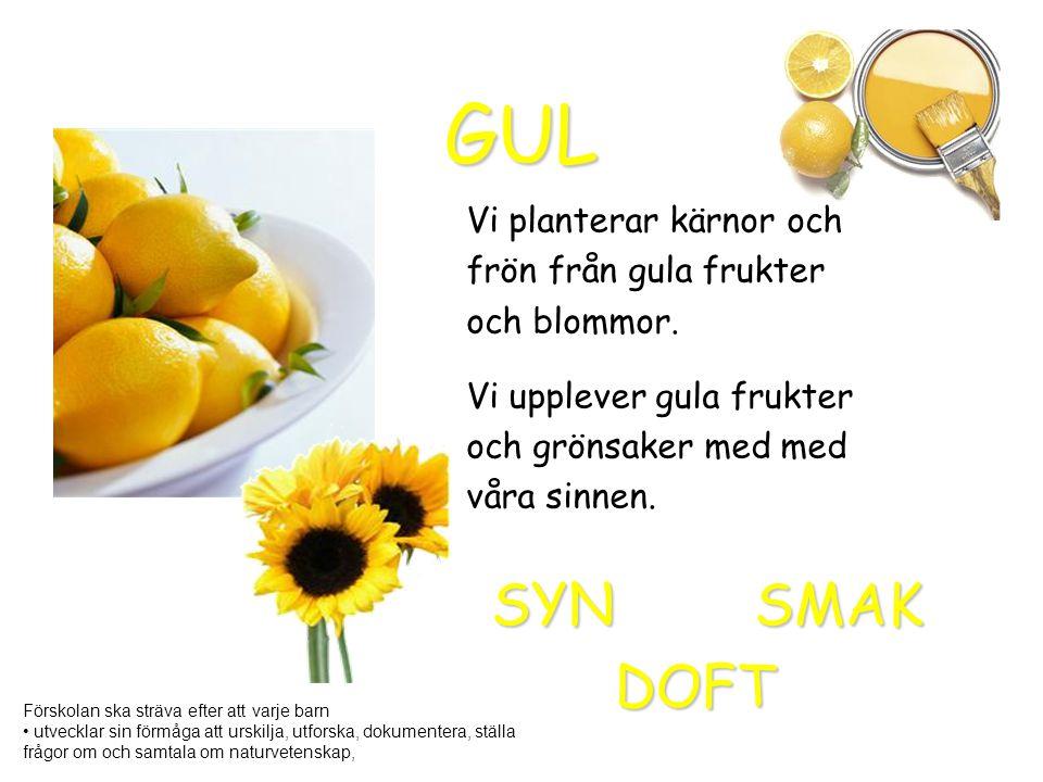 GUL SYN SMAK DOFT Vi planterar kärnor och frön från gula frukter