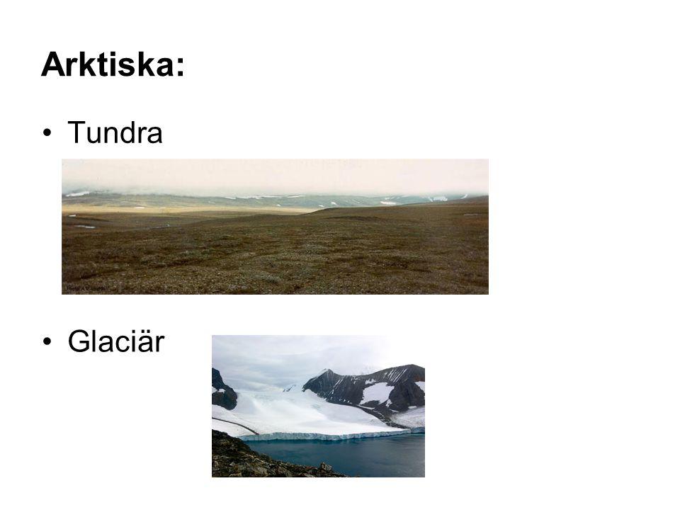 Arktiska: Tundra Glaciär