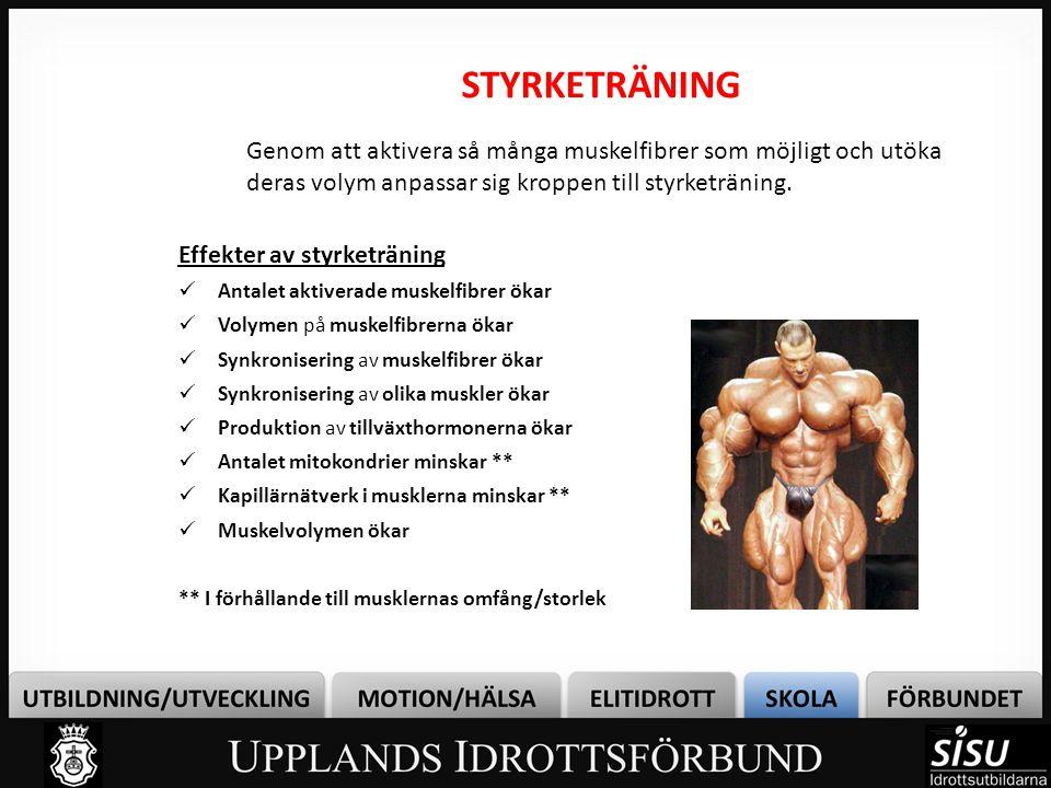 STYRKETRÄNING Genom att aktivera så många muskelfibrer som möjligt och utöka deras volym anpassar sig kroppen till styrketräning.
