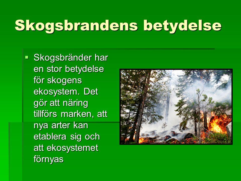 Skogsbrandens betydelse