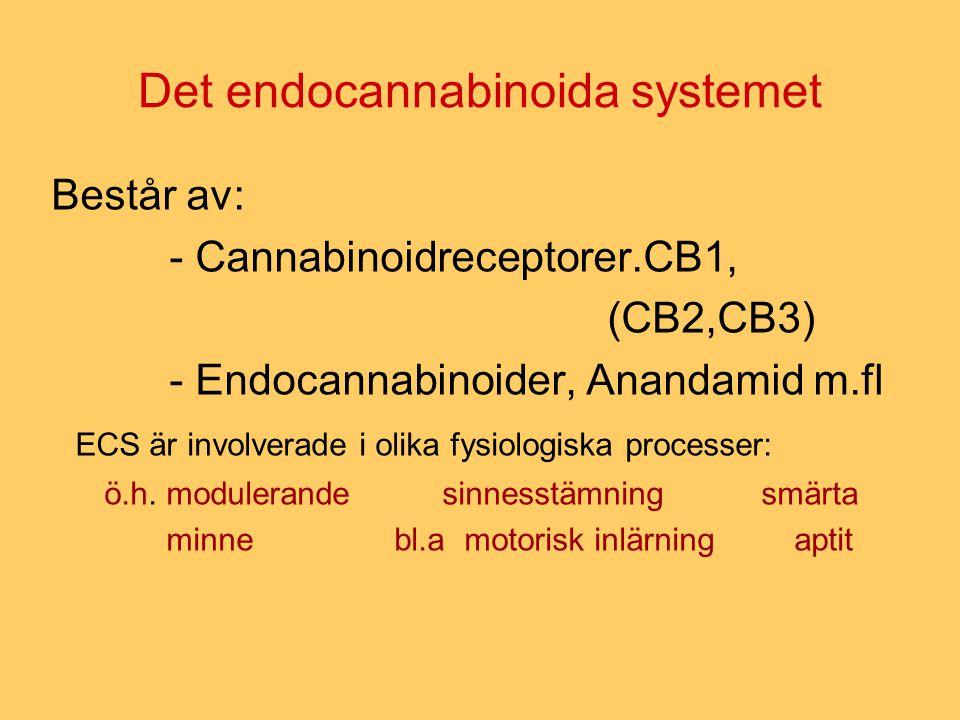 Det endocannabinoida systemet