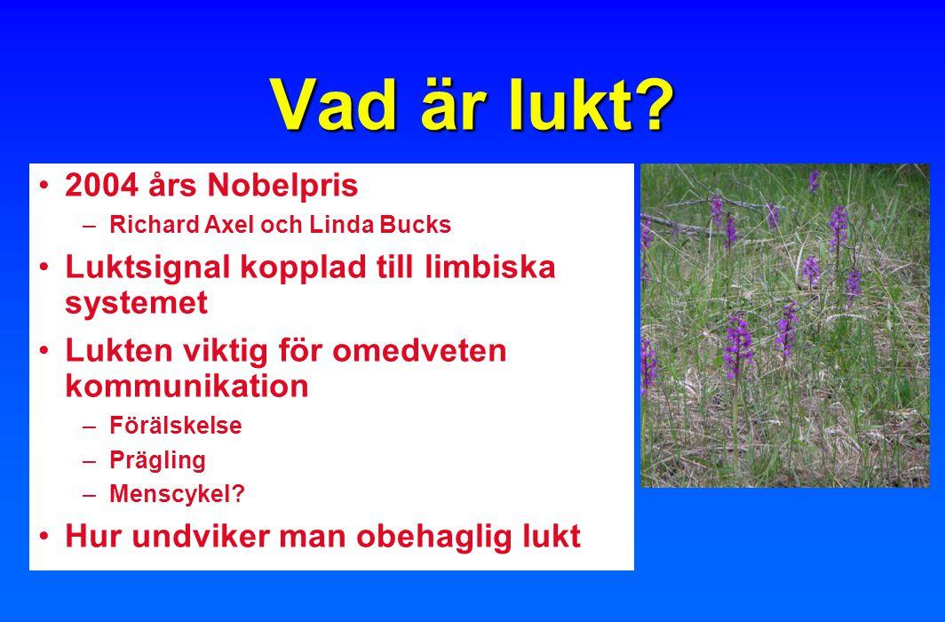 Vad är lukt 2004 års Nobelpris
