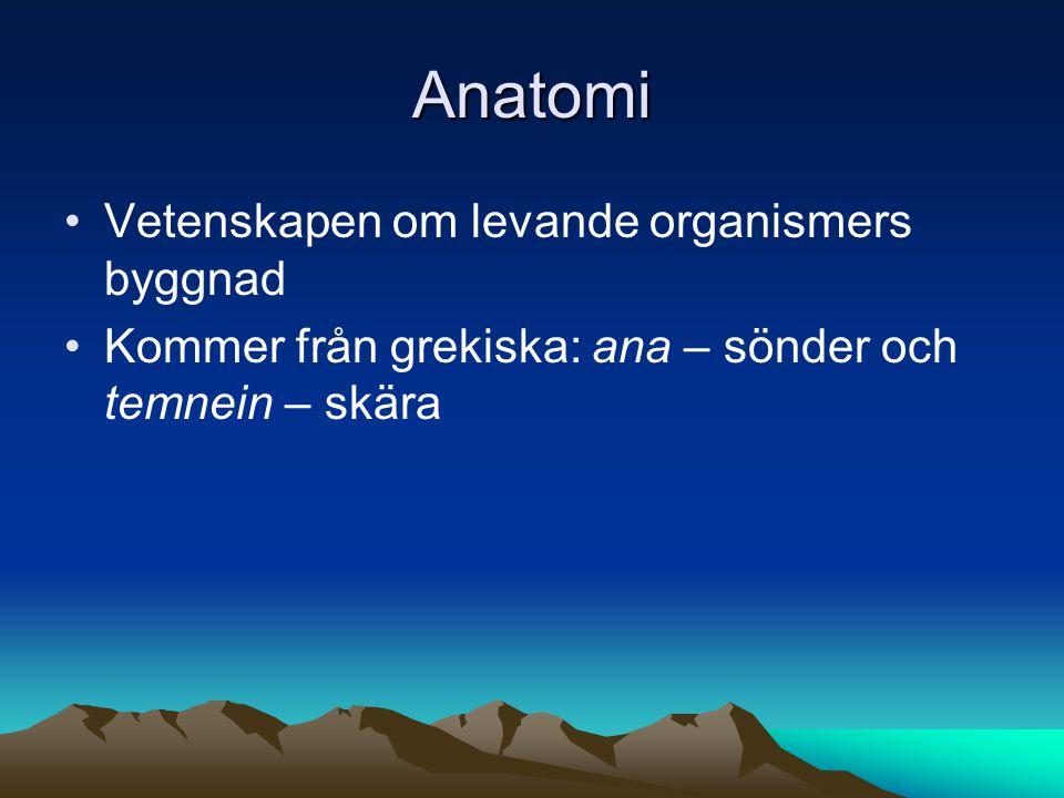 Anatomi Vetenskapen om levande organismers byggnad
