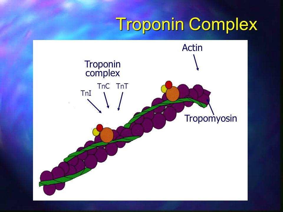 Troponin Complex Actin TnI TnC TnT Tropomyosin Troponin complex