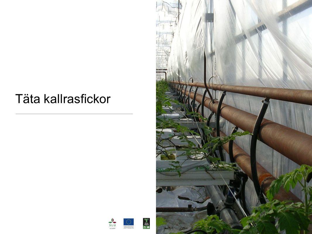 Täta kallrasfickor Kall luft är tung och trycker in plastfolien.