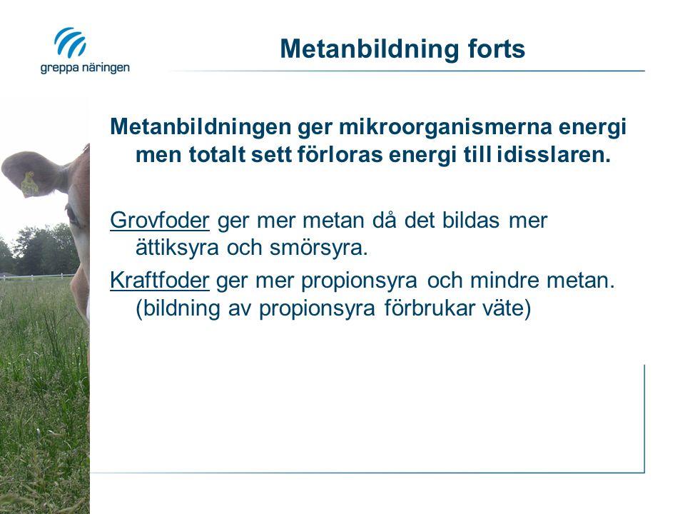Metanbildning forts Metanbildningen ger mikroorganismerna energi men totalt sett förloras energi till idisslaren.