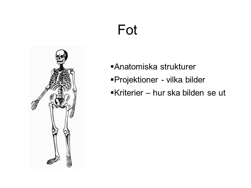 Fot Anatomiska strukturer Projektioner - vilka bilder