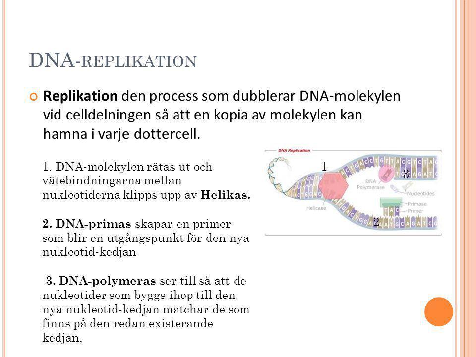 DNA-replikation Replikation den process som dubblerar DNA-molekylen vid celldelningen så att en kopia av molekylen kan hamna i varje dottercell.